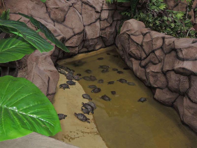 Крокодиловая ферма Анапа фото