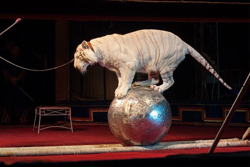 Анапа цирк Максимус фото