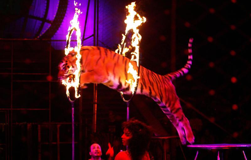 Цирки Анапы