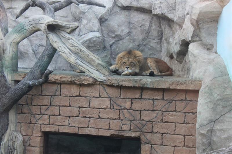 Зоопарк Балу Анапа