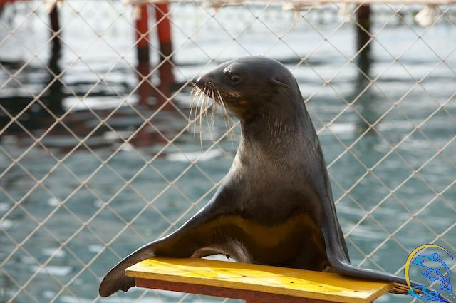 Анапа утриш дельфинарий
