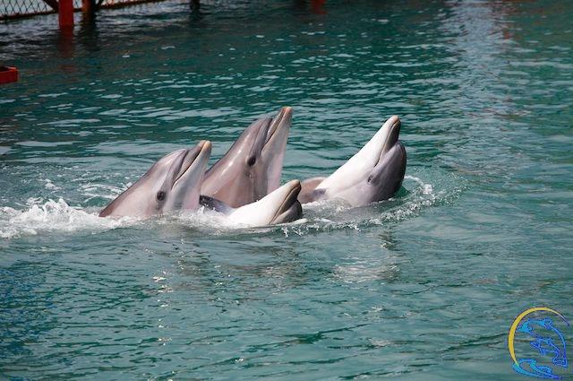 Дельфинарий на Утрише фото
