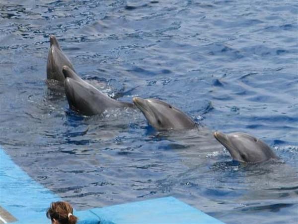 Анапа дельфинарий.