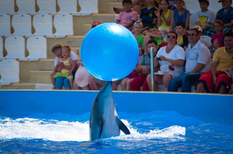 Дельфинарии в Анапе