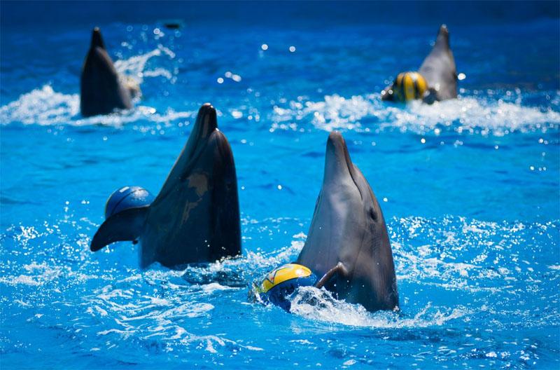 Анапа дельфинарий Немо