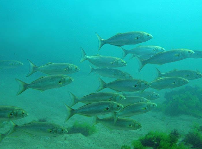 Озеро великое тверская область рыбалка фото обратите внимание