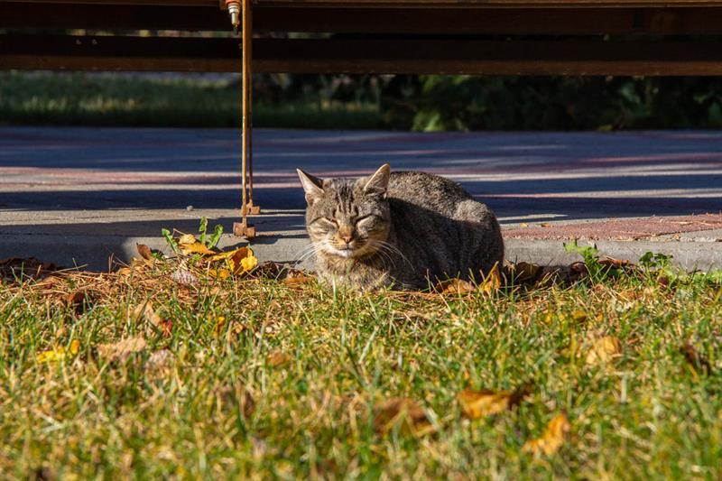 Анапа коты