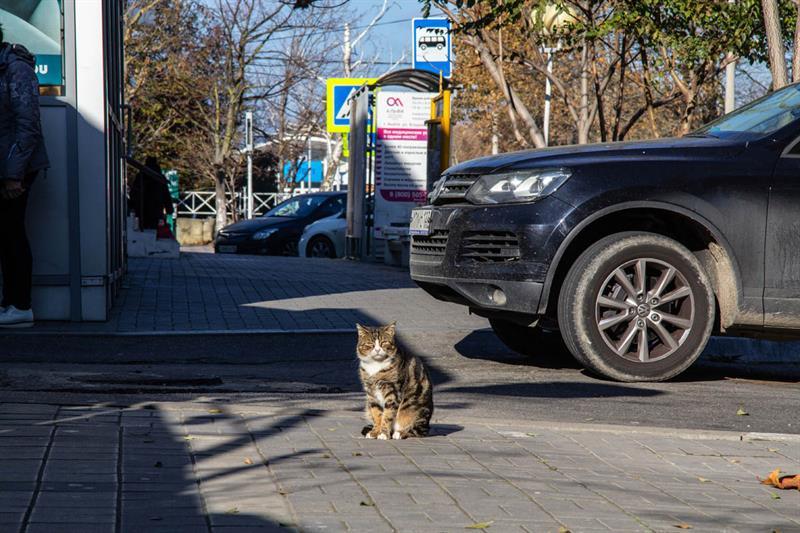 Коты в Анапе