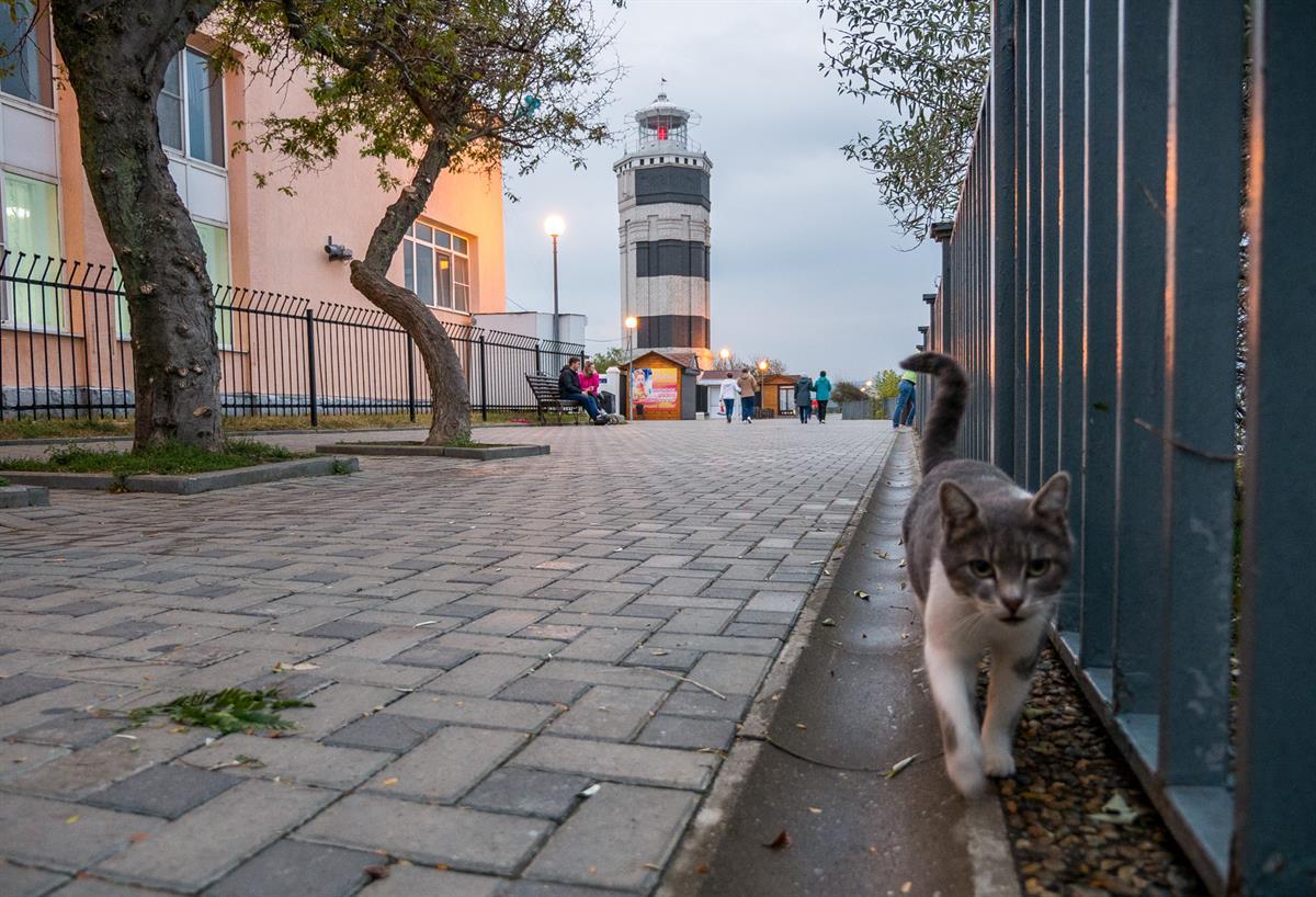 Кот на набережной