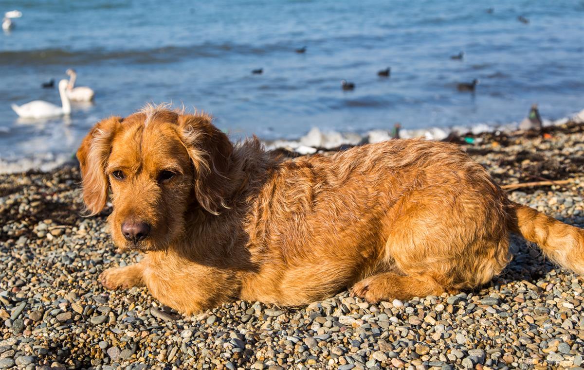 Собака на пляже Анапы