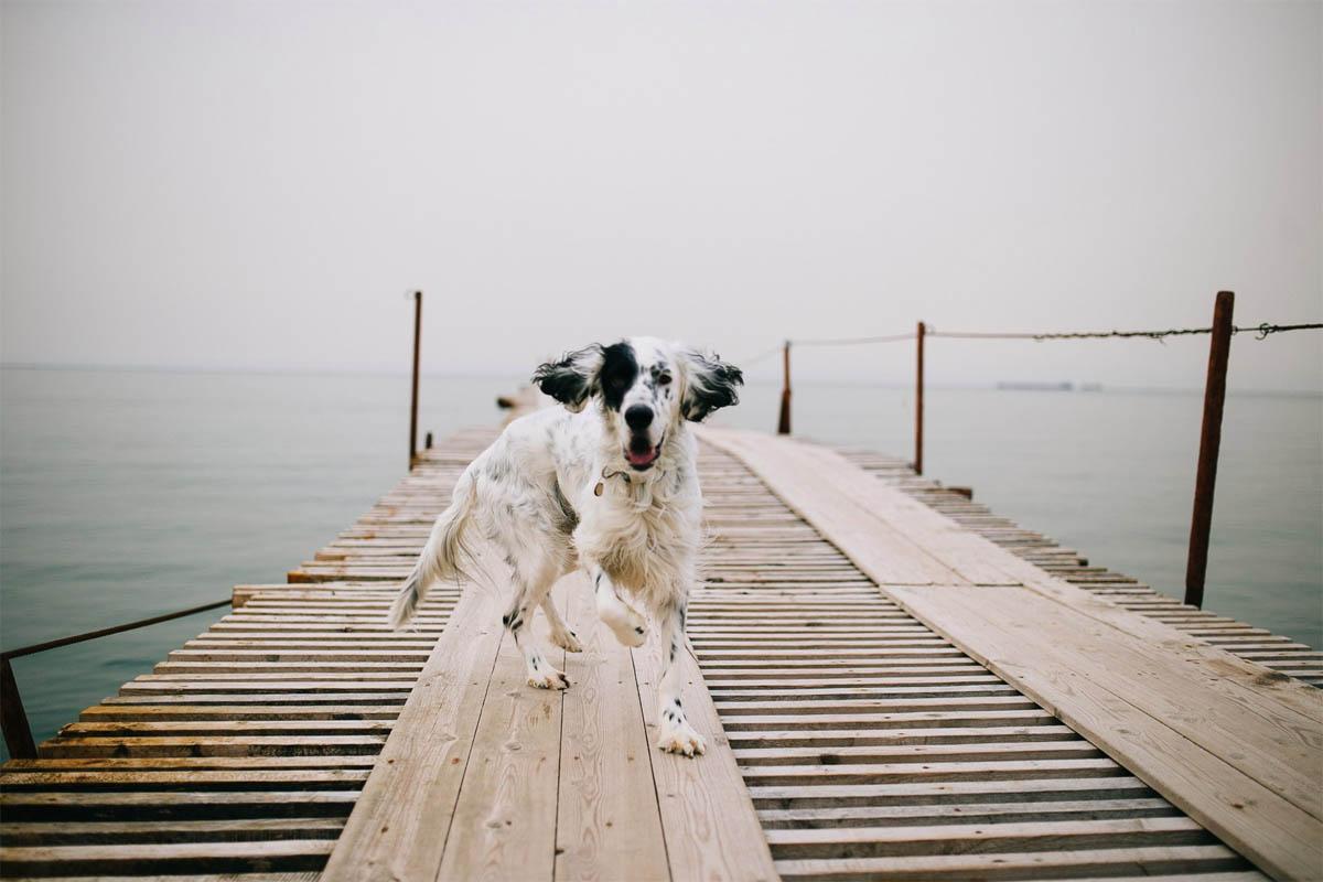 Собаки на пляже Анапы