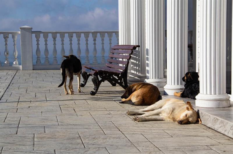 Собаки в Анапе