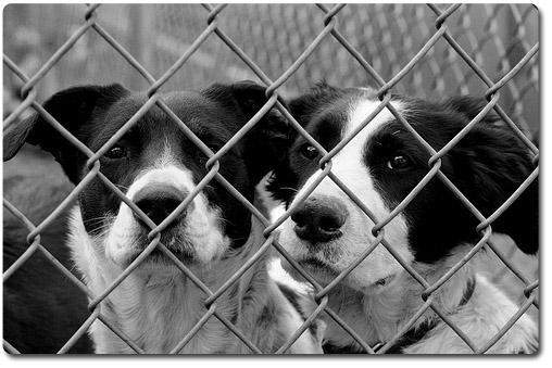 Анапа бездомные животные.