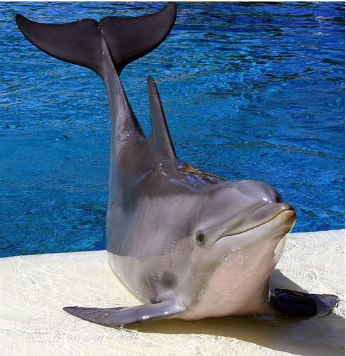 Анапский дельфин