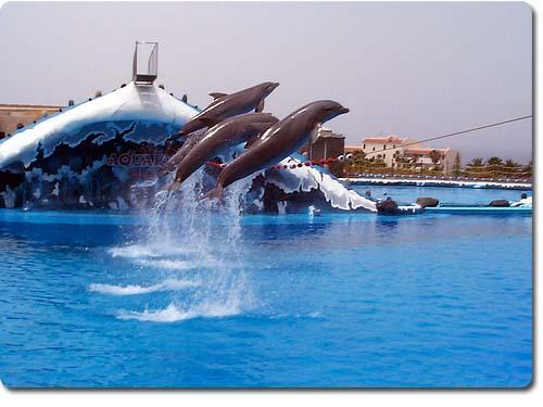 Анапа аквапарк дельфинарий