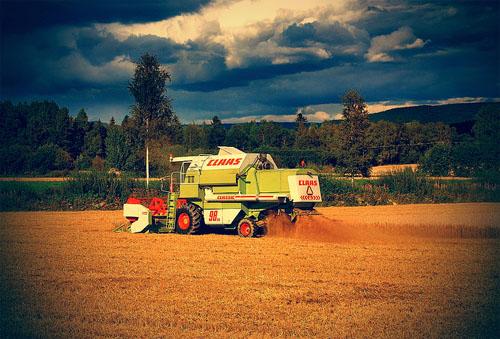 Анапа сельхоз