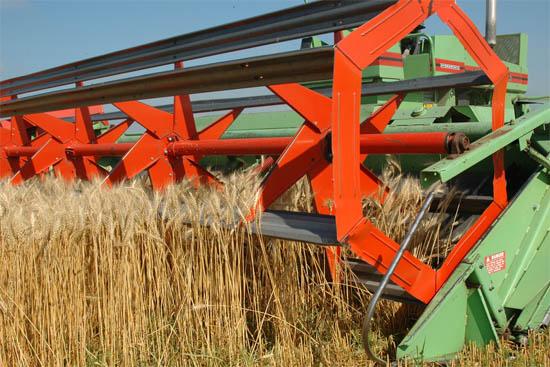 Анапа уборка пшеницы